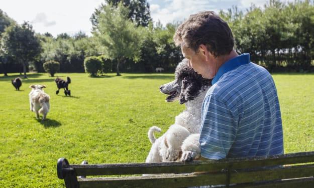 The Basics Of Dog Park Etiquette