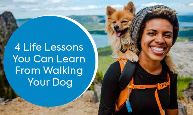 4 Life Lessons You Can Learn From Walking Your Dog