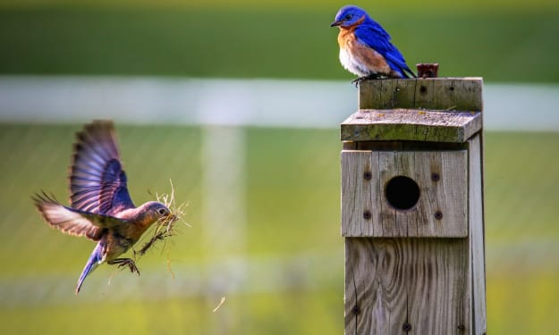 4 Ways to Turn Your Backyard Into a Wildlife Habitat For Your Children