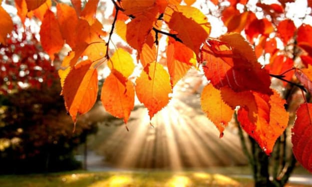My Top 5 favorite things about Autumn