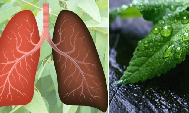 15 Powerful Herbs For Your Lungs Health