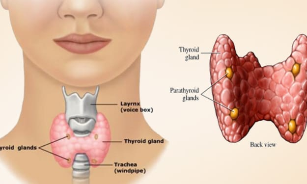 Facts of Thyroid gland