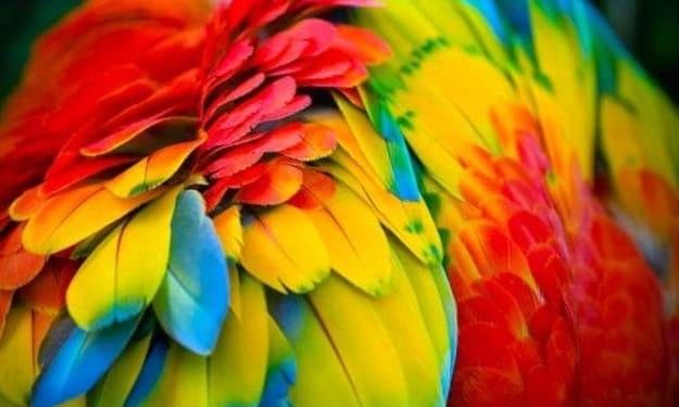 The Vibrant Colors of Costa Rica