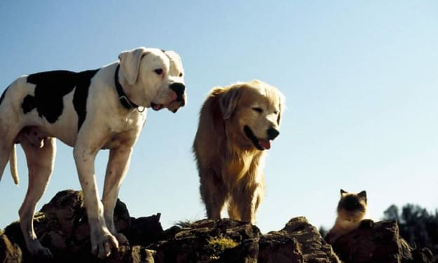 Homeward Bound: The Incredible Journey - A Movie Review