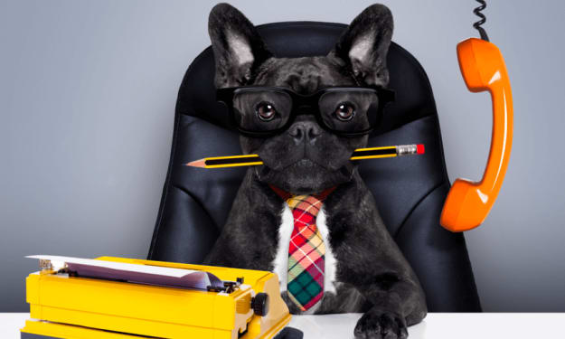 How Office Pets Can Improve the Workplace