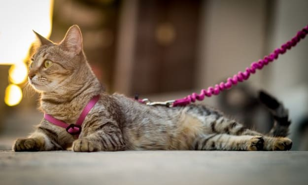 Guide To Choosing The Best Escape Proof Cat Harmless