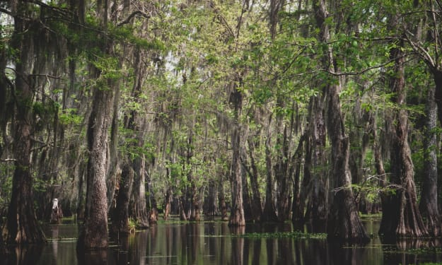 Louisiana's First Climate Change Refugees