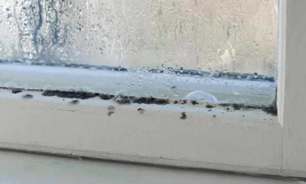 How to Limit Mold Growth During the Winter