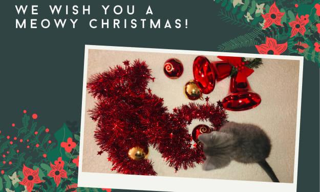 Grey Finn's First Christmas
