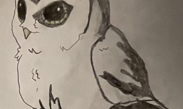Owl be Watching