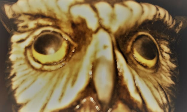 Midland County Night Owl