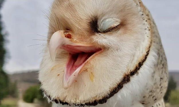 Owlita