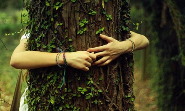 Confessions of A Secret Tree Hugger