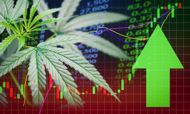 Top 5 Marijuana Stocks