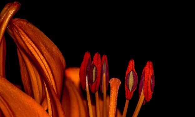 How to Take Amazing Macro Photos of Flowers