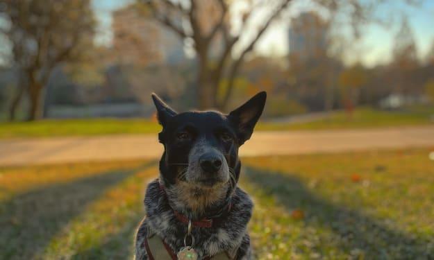 The Dark Secrets Behind Dog Food