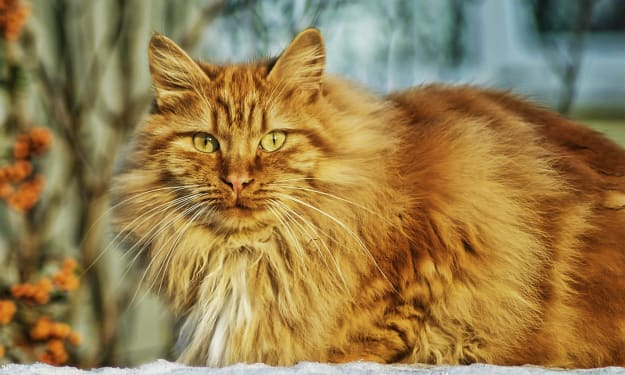 The Vikings Helped Spread Cats Across The World