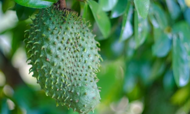 Consuming Exotic Fruit As A Form Of Medicine