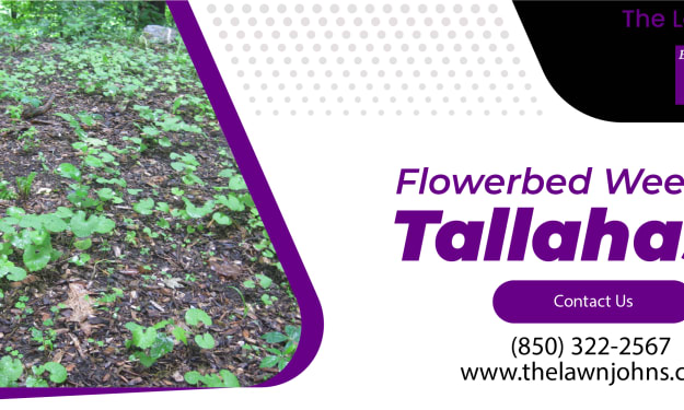Best Flowerbed Weed Control Service Provider in Tallahassee