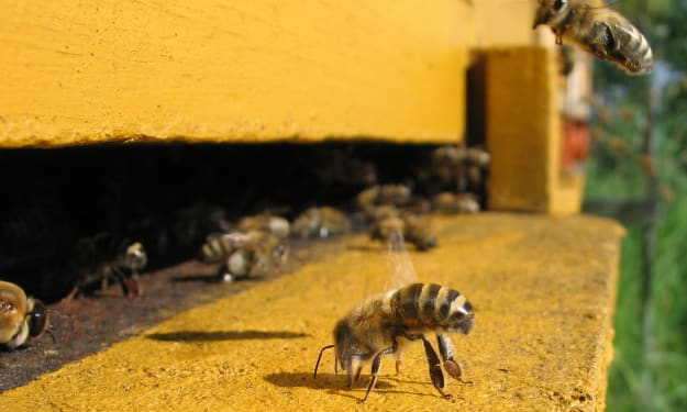 The Disappearance of the Honeybees