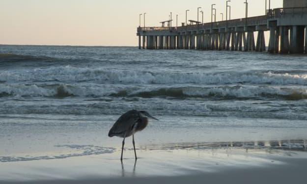Alabama Coastal Wildlife