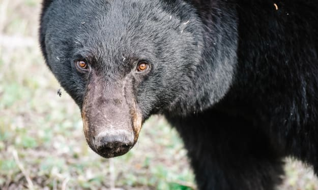 You Think You Know Bears? Think Again