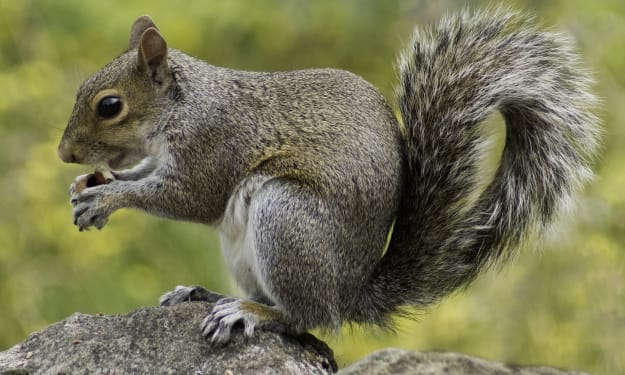 Swish and Flick: Fascinating Facts About Squirrels (and Their Tails)