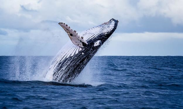 Visit Western Australia and have a whale of a time!