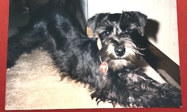 Coco—The Prescription Puppy