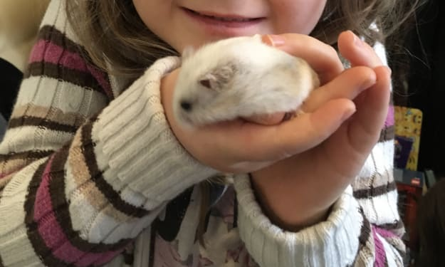 Furry Fratricide with Cloud - The Carnivorous, Murderous Hamster