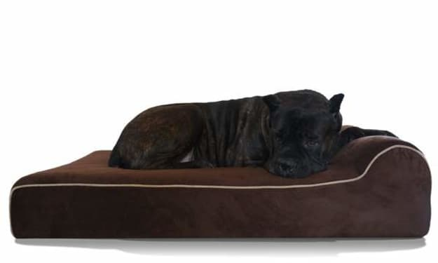 How to Choose the Right Bed for Your Dog?