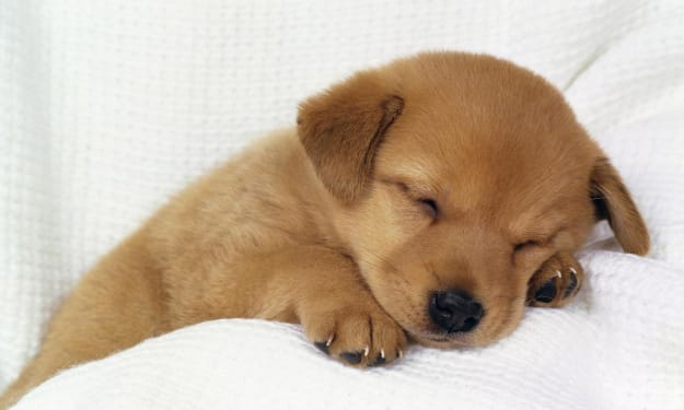 What should I do if the dog has no energy all day?
