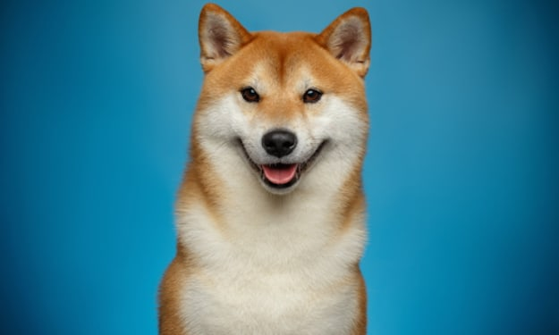 Dogecoin future of the Cryptocurrency.