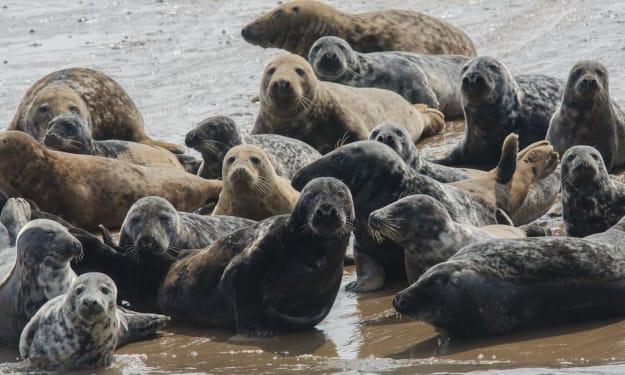 Mammals seen in British coastal waters