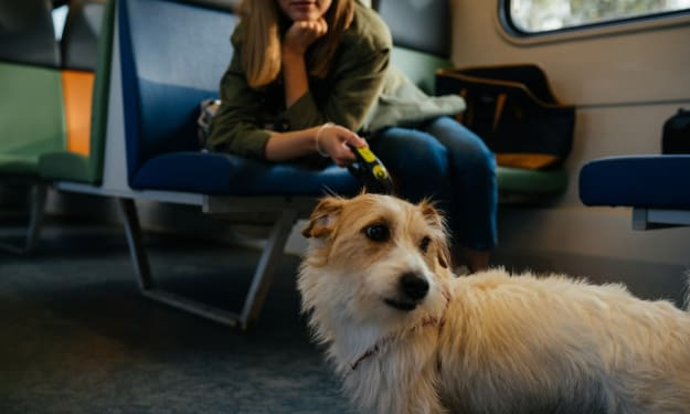 The New Travel Ban on Emotional Support Animals Could Cost Airlines Billions