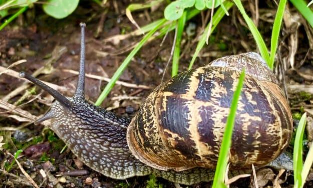 The snail's journey