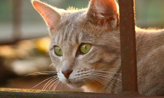 Demystifying Cat Alzheimer's Disease