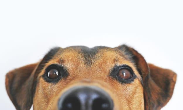 Dogs Post-Lockdown: