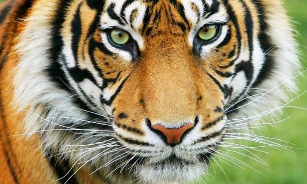 Tiger Striped Sky - I