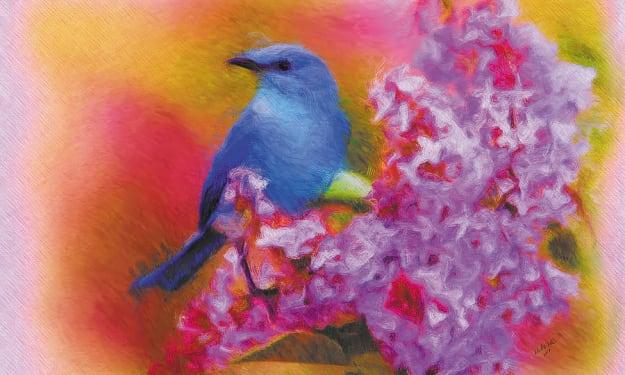 Dear Bluebird
