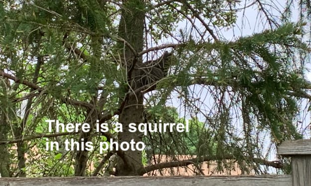 How Not to Photograph a Squirrel