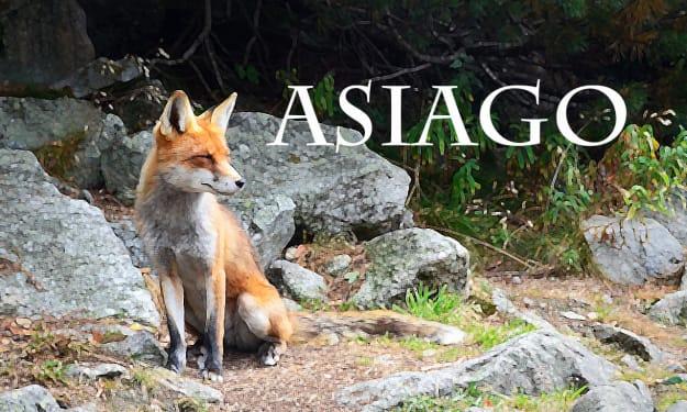 Asiago No.3