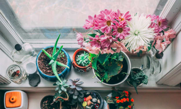 Some Useful Tips To Maintain The Indoor Plants Easily