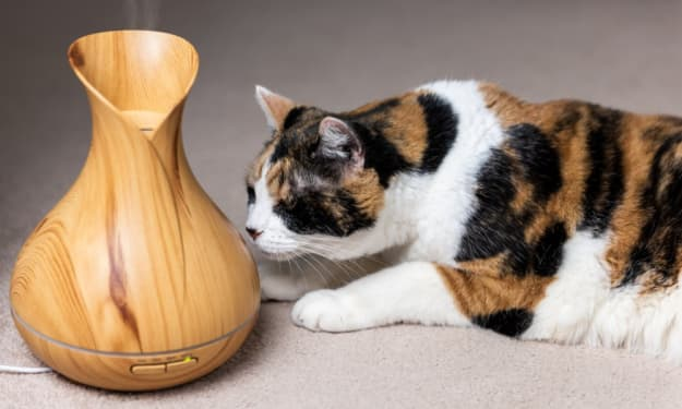 Should You Expose or Even Give Your Cat Essential Oils