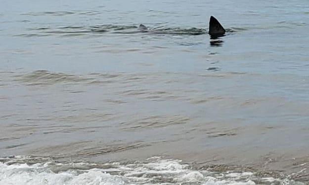 A Loan Shark