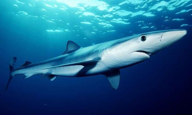 baby shark bingo.