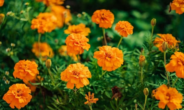 The Marigold Relationship