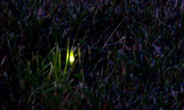 Glowing Green
