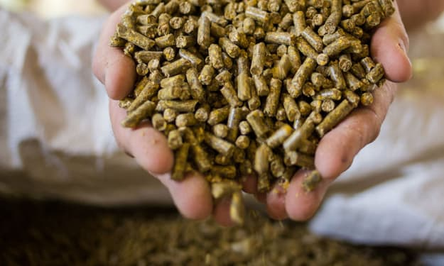 Animal Feed Protein Ingredients Market Growth, Opportunities, Challenges and Forecast to 2026
