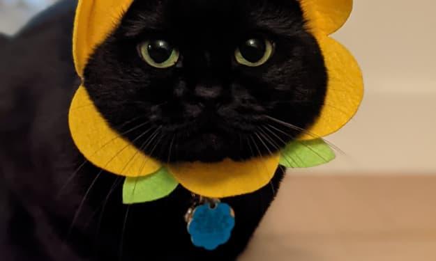 April's Marigold